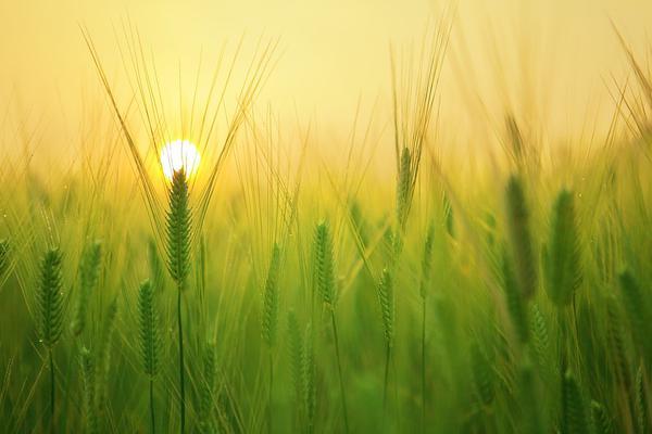 Pomoc roślinom we wzroście