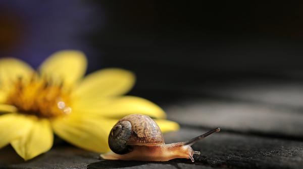jak hodować ślimaki