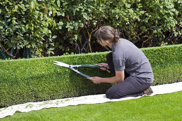 porada ogrodnicza