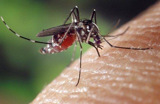najlepsze opryski na komary w białymstoku